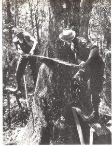 Old Cypress Logging