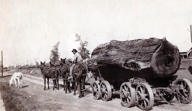 cypress_logging_1