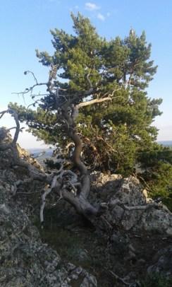 Curioso sitio para que salga un pino