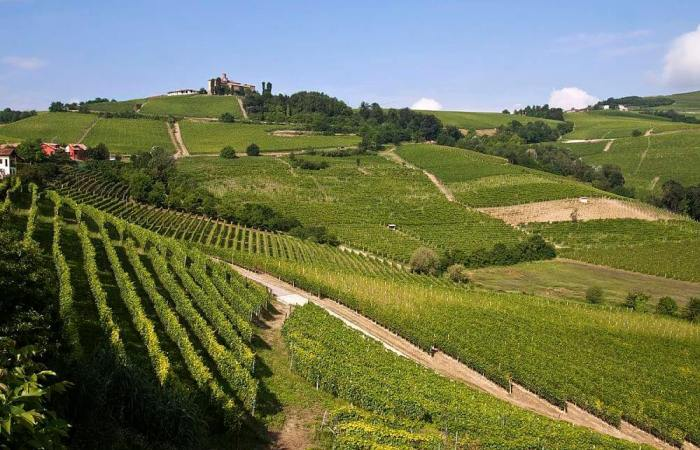 Piedmont food and wine day tour, Barolo And Barbaresco Valley