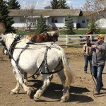 Driving Clinic - Alberta Carriage Supply