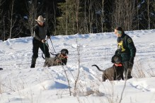 Houndsman Lorne and wildlife biologist Chiara release the hounds on a cougar track