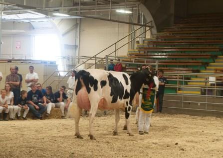 Cow Champ 4