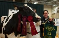 Cow Champ 7(1)
