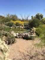 Usery Mtn. Park - Mesa, AZ