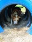 Tire tunnel - petfinderfoundation.com/blog