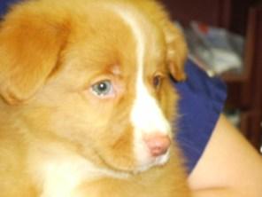 Finny - 8 weeks, first vet visit