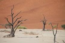Namibia_1-26
