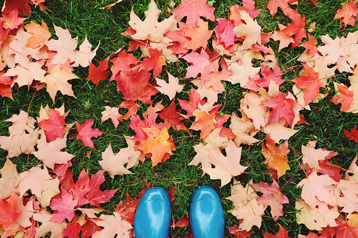fall15-1