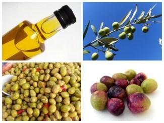 """Résultat de recherche d'images pour """"olive du var"""""""