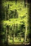 #ForestaUmbra #Gargano #WeAreInPuglia #VisitPuglia -  Ph Carlo Giarrusso