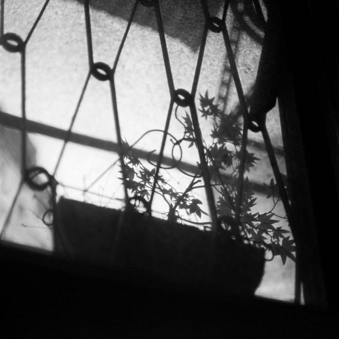 Outside world Kodak - T-MAX100 shot at EI 100. Black and white negativefilm in 120 format shot as 6x6.