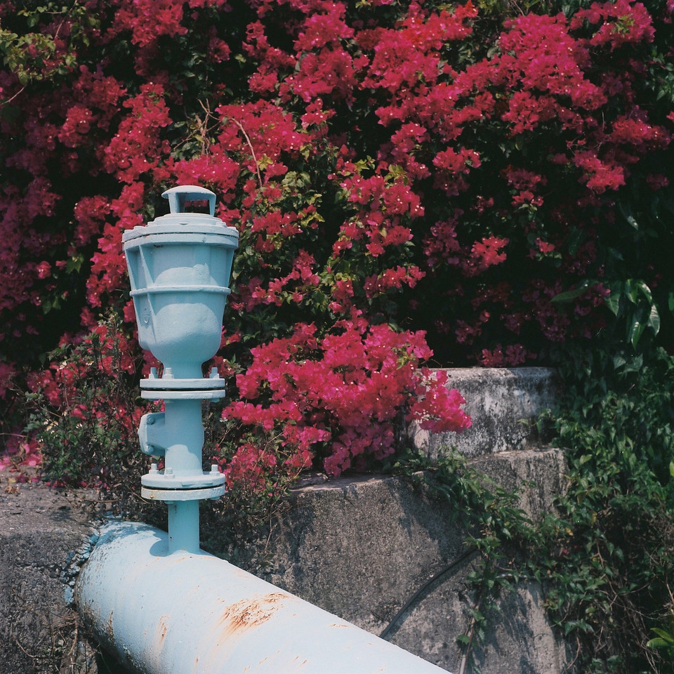 Pipe dreams - Shot on Fuji Pro 160NS at EI 100. Color negative film in 120 format shot as 6x6.