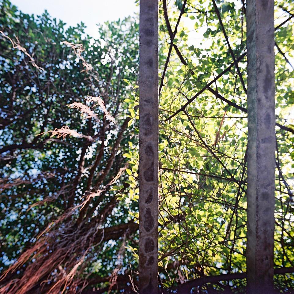 Barred skies - Kodak Portra 400 shot at EI 400. Color negative film in 120 format shot as 6x6.