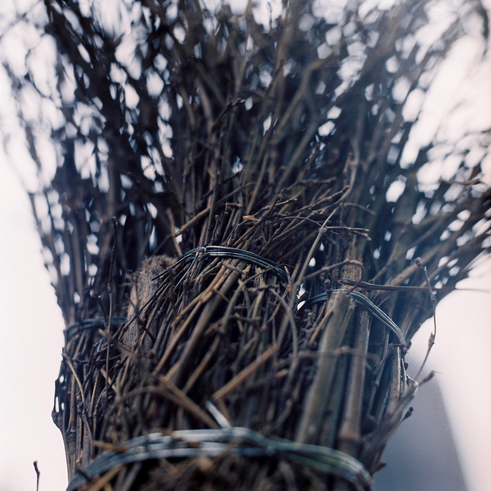 Besom 02 - 2015-05-03 - Fuji Pro 400H shot at EI 200. Color negative film in 120 format shot as 6x6. 2x teleconverter.
