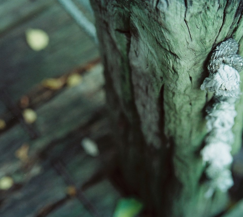 Knotty post - Shot on Kodak VISION3 250D 5207 at EI 250. Color motion picture film in 35mm format.