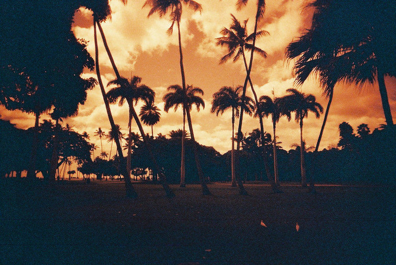 Ochre palms - Shot on Lomography Redscale 100 at EI 100 Redscale negative film in 35mm format