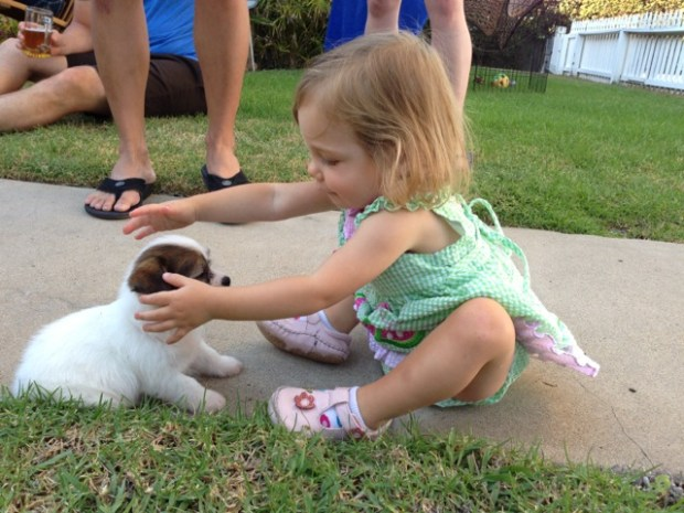 Tiny puppy for a little girl.