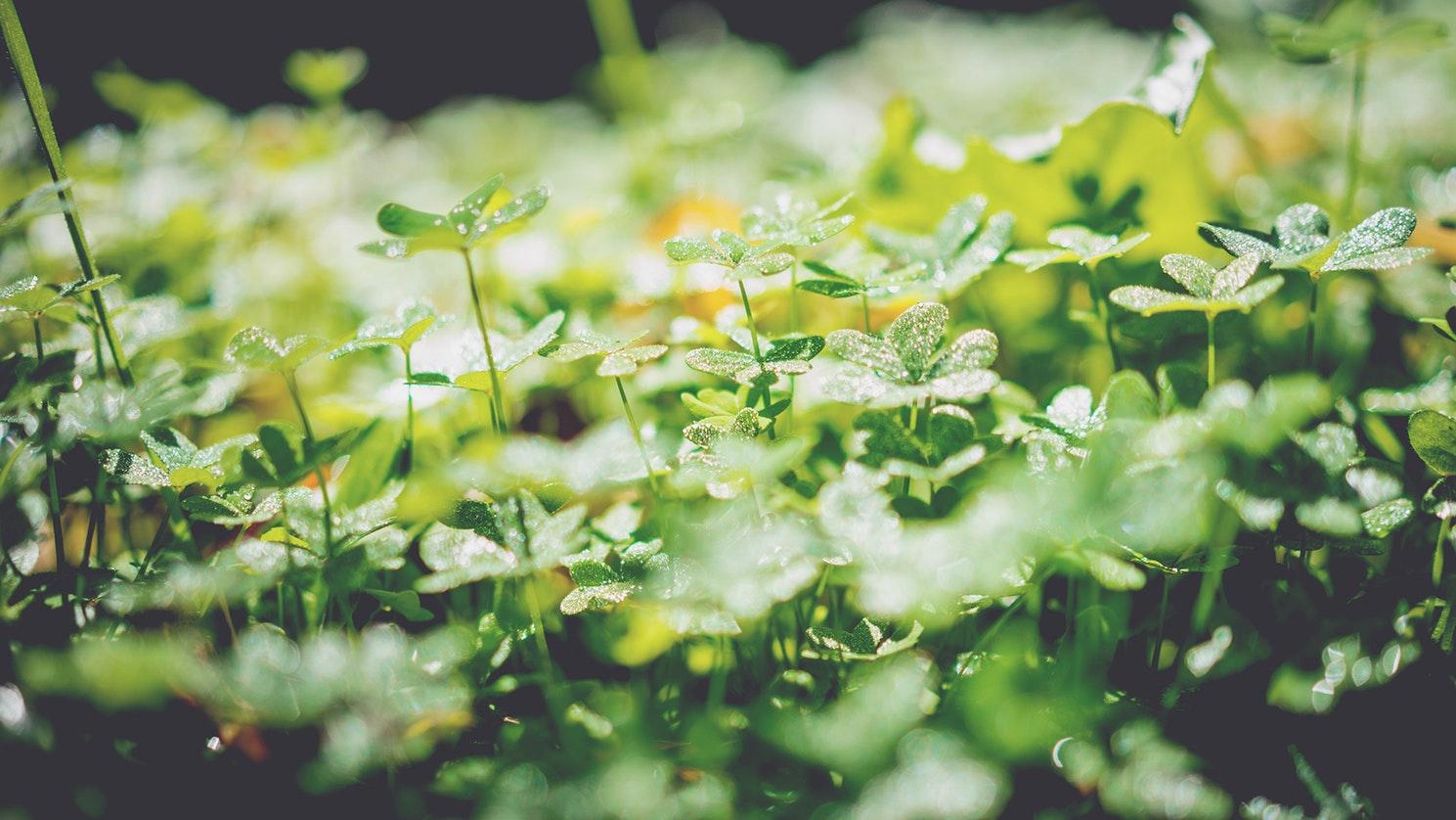 Un naturopathe, c'est quoi au juste ?