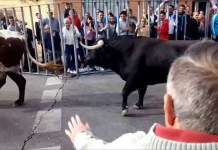 toros fuenlabrada