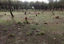 árboles enfermos en el parque de La Alhóndiga
