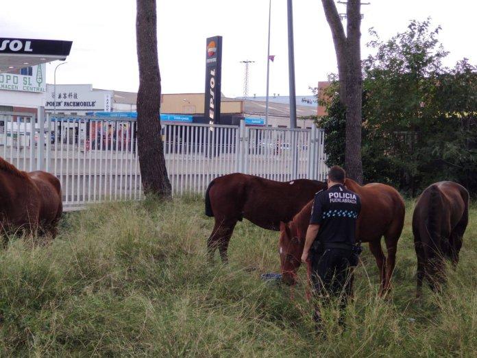 caballos M-506 Fuenlabrada