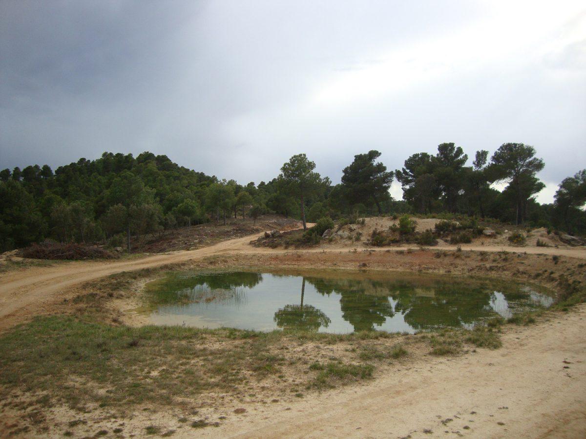 """Turismo ecuestre en el Bajo Aragón - balsa de """"La Basella"""""""