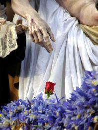 Lirios acompañan a la rosa que cada Lunes Santo va debajo de la mano del Santísimo Cristo de la Caridad, titular de la Hermandad de Santa Marta.