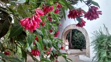 Coralito en el patio de Romero Murube, R.A.