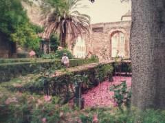 Flores de ceiba en el patio del León del Real Alcázar de Sevilla