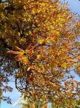Otoño en el Alcázar. Detalle de las hojas cambiando de color antes de su caída