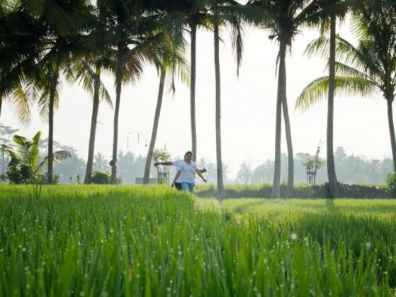 28. Activities - Ricefield Treeking (2)