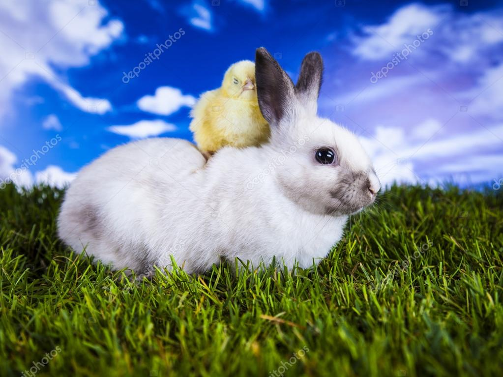 Easter, bunny and chicken