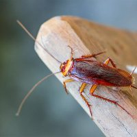 Pest Control Goolwa