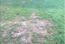 Vox alerta sobre el posible de los campos de fútbol de las Huertas