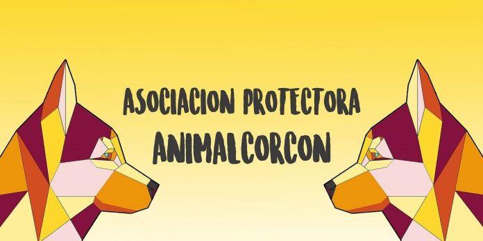 Arte solidario en favor de Animal Alcorcón