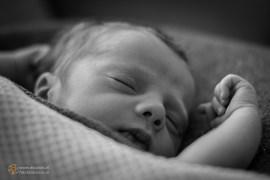 baby-3511