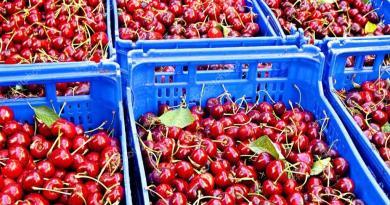 spain cherries