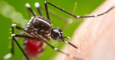 Dengue-fever-spain