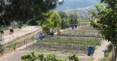 organic garden Alcoy