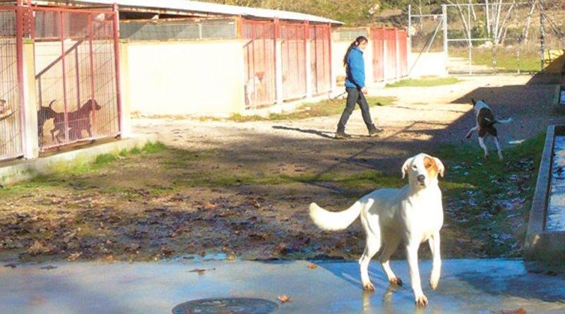 animal-shelter-alcoy
