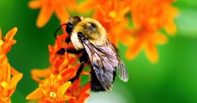 alcoy-bees-honey