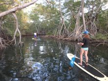 Mangrove exploration in Bahia Santa Elena