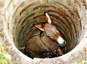 DonkeyInTheWell