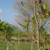 Tree following - April