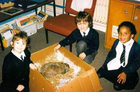 Pets at school - Chocolate the rabbit.