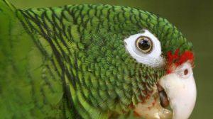 XXVII Simposio del DRNA: Las especies amenazadas y en peligro de extinción en Puerto Rico