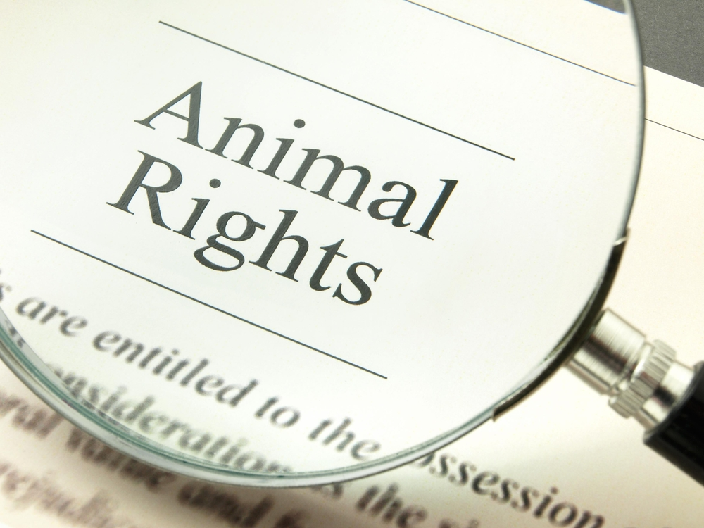 Justicia radicará cargos contra sujeto que abandonó a perrita en Ponce