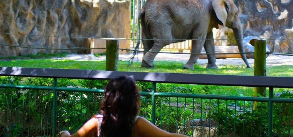 Comité recomienda trasladar animales del zoológico de Mayagüez a santuarios para mejorar su calidad de vida