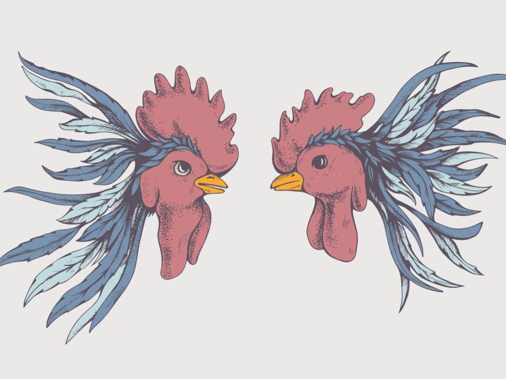 Reflexión sobre las peleas de gallos en Puerto Rico